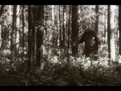 Wes Germer C2C Interview: Terrifying Bigfoot Encounter