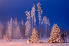 fairy-tale forest(Сказочный лес) by Анатолий Соколов(Anatoly Sokolov), via 500px