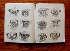 Pugs sketch © Dave Mottram
