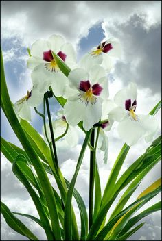 Orquideas brancas by gilxxl, via Flickr