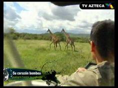 Difícil De Creer  África: La jirafa, el animal más alto del planeta Tanzania, Videos, Animals, Kenya, Naturaleza, Blue Prints, Storytelling, Animales, Animaux