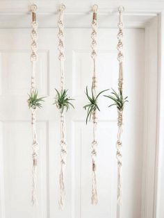 Outstanding 55+ Best Air Plants Ideas For Amazing Home http://decorathing.com/garden-ideas/55-best-air-plants-ideas-for-amazing-home/