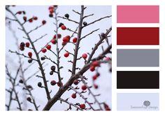 Color Palette - Berry Fresh
