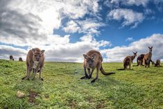 Want to Sleep With Wolves (Or Elephants, Or Giraffes)? Here's How! | CheapOair Miles Away Travel Blog