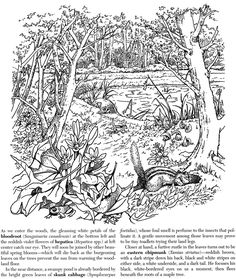 Welcome to Dover Publications A Walk in the Woods Coloring Book. Much more than just a coloring book. It would definitely be a wonderful science lesson as well.