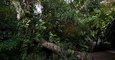 Uma ponte faz a transição entre o jardim da casa e a mata tropical junto ao Instituto Moreira Salles, na Gávea, Rio de Janeiro. A área, que circunda um riacho, tem vegetação densa, de aspecto silvestre