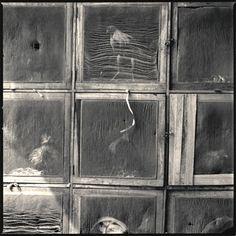 Caliseo Gallo de Oro 1 by Hiroshi Watanabe - Susan Spiritus Gallery Japanese Photography, Modern Photography, Still Life Photography, Black And White Photography, Hiroshi Watanabe, Spiritus, Another World, Timeline Photos, Wabi Sabi