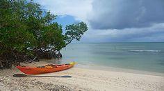 À la découverte de la mangrove