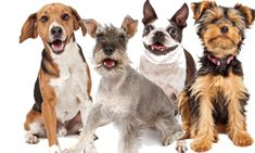 Best Dog Food For Dogs With Arthritis and Joint/Mobility Issues