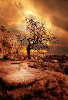 """This tree is in the """"sacred rock"""" of Acropolis in Athens, Greece, by Petros Asimomytis, via 500px."""