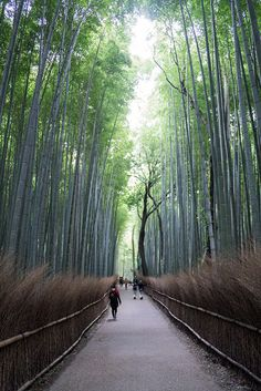 DISCOVERING TRADITIONAL KYOTO
