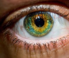 Sunflower eye...amazing!!