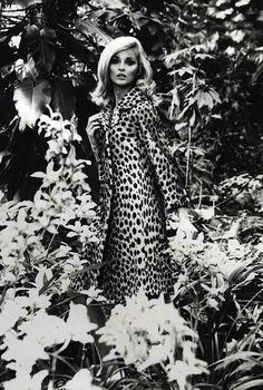 Vintage Leopard. @thecoveteur