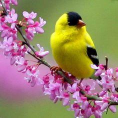 giallo e nero su fiori