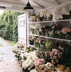 Flower Farm, My Flower, Fresh Flowers, Beautiful Flowers, Flower Aesthetic, Planting Flowers, Floral Arrangements, Bloom, Floral Design