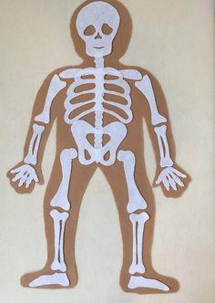 My Body Skeleton Educational Felt Set Anatomy Bones Montessori, Bodies, Anatomy Bones, Skull Anatomy, Science Toys, Cricut, Human Body Parts, Animal Masks, Fabric Markers