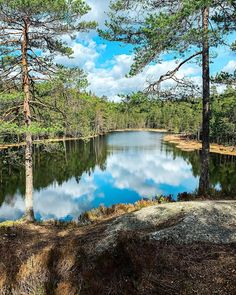 "Malin Kjølseth ☼ on Instagram: ""🤩🌲 ha en fin mandag!"" River, Nature, Outdoor, Instagram, Outdoors, Naturaleza, Outdoor Games, Nature Illustration, The Great Outdoors"