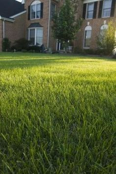 Give your lawn the nutrients its needs. An application of Milorganite in early fall (Labor Day) provides your lawn with the nutrients it needs to recover from summer stress and strengthen the root system. Learn more fall lawn tips here. Fall Lawn Care, Lawn Care Tips, St Augustine Grass, Growing Grass From Seed, Reseeding Lawn, Planting Grass, Bermuda Grass, Lawn Sprinklers, Lawn Maintenance