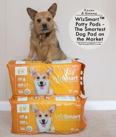 Review & Giveaway: WizSmart™ Potty Pads - The Smartest Dog Pad on the Market #Sponsored