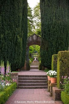Photography By Saxon Holt Brick path in Filoli historic estate leading from Sunken garden through tall yew shrubs (Taxus) to entry to Wall Garden, landscape design axial view Most Beautiful Gardens, Unique Gardens, Beautiful Castles, Amazing Gardens, Landscape Architecture, Landscape Design, Garden Design, Yew Shrub, Brick Path