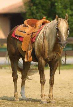 Buenonic Chex  (Reminic x Sample Chex)  1994 Palomino AQHA Stallion