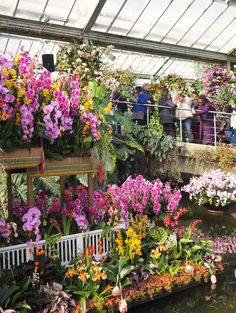 England Travel Inspiration - Beautiful British Gardens: Visiting Kew Gardens, London & The Orchid Festival. If you're a botanical lover then a visit to this London institution is a must - make sure you check out the iconic staircase in the Palm House.