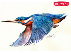 Kingfisher by Bixxy Nash<br/>Created using: Inktense Pencils
