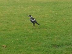 ver pássaros no seu habitat e solto...não tem preço...