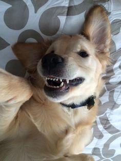 ¿Tu perro necesita brackets?
