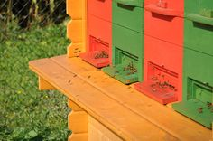 In the beginning beekeeping might appear like a very difficult occupation. Beginners in the domain have so many questions that it appears to them that they will never learn how to properly keep bees. Raw Honey, Beekeeping, Look Cool, Homesteading, Yard Ideas, Bees, Outdoor Decor, Insects, Colors