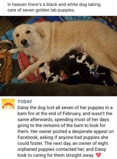 17 Wholesome Memes That Even Your Grandma Can Enjoy - AWW - - Were not crying youre crying. The post 17 Wholesome Memes That Even Your Grandma Can Enjoy appeared first on Gag Dad. Cute Funny Animals, Cute Baby Animals, Funny Cute, Animals Dog, Funny Pics, Funny Pictures, Black And White Dog, White Dogs, White Puppies