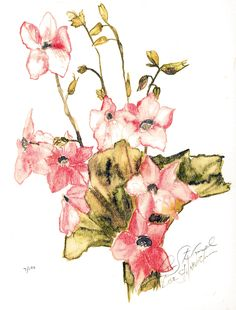 Tobacco Flower,watercolor L. Stilnovich