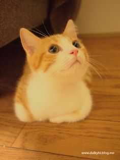 Yes.. I LOVE CAT'S! they will be all over my pinterest!