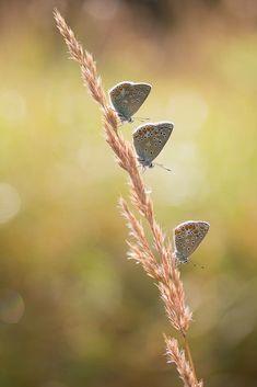 Een mooie zachte opname van wel drie vlinders op een rij! 🦋 En een prachtige bokeh op de achtergrond. 😍 Dat maakt Jbeukenex ons Nieuw Talent! 🏆 Welkom op Zoom! Bokeh, Insects, Zoom, Butterfly, Photography, Animals, Photograph, Animaux, Animales