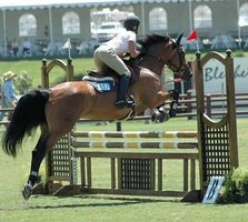 How to Build Standards for Horse Jumps thumbnail