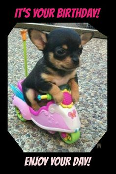 Puppy on scooter