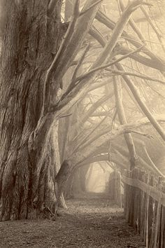 ✯ Whisper in the Hallowed Halls of the Wood