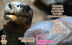 Share to help us :) Compártelo para ayudarnos https://www.indiegogo.com/projects/geekpet-comunidad-de-pet-lovers/#/ #mascota #pet #startup #peru #petlover