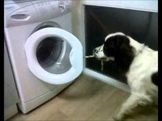 Funny Dog Does Chores Around the Houshold