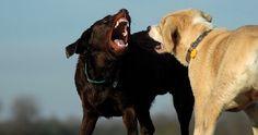 Ecomundo: Cómo evitar que el perro ataque a otros perros