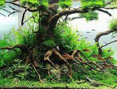 aquascaping - une création sélectionnée par la rédaction de www.source-a-id.com