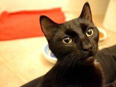 Addie is available, super sweet lap baby!
