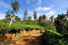 Roteiro de 16 dias no Sri Lanka (a minha viagem)   Alma de Viajante Sri Lanka, Travelling, Vineyard, Outdoor, The Journey, Wayfarer, Travel, Outdoors, Vine Yard