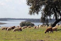 J'y suis allée ! PORTUGAL, au sud de l'Alentejo, Beja est actuellement un grand centre agricole. On y produit principalement la laine, le blé, l'huile d'olive et le chêne-liège. ll faut donc s'attendre à y découvrir de magnifiques paysages champêtres ponctués de fermes, dont certaines ont été transformées en chambres d'hôtes.