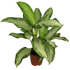 9 House Plants that make the air cleaner