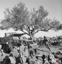 réalisé, entre février et juillet 1943,  Leurs images concernent exclusivement la participation de l'armée d'Afrique à la campagne de Tunisie. On y voit à l'œuvre le XIXe corps d'armée commandé par le général Koeltz,  Les moments saisis évoquent notamment l'offensive allemande du Faïd, la reconquête de la dorsale orientale, la bataille de Kasserine, les attaques au nord du Chott el Djerid, la prise de Gafsa, la bataille du massif de l'Ousselat et l'avance vers Bizerte et Tunis.