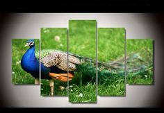 """""""PEACOCK IN THE GRASS"""""""
