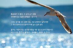 독수리가 더 빨리, 더 쉽게 날기 위해 극복해야 할 유일한 장애물은 '공기'다.  그러나 공기를 모두 없앤 다음 진공 상태에서 날게 하면, 그 즉시 땅바닥으로 떨어져 아예 날수 없게 된다.  공기는 저항이 되는 동시에 비행을 위한 필수조건이기 때문이다.  마찬가지로 인간의 삶에서도 장애물이 성공의 조건이다.  - 존 맥스웰  #좋은글 #톡톡힐링 Learn To Read, Learning, Laughing, Teaching, Studying