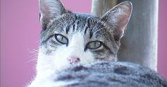 Protetores de animais em Uberaba denunciam envenenamento de gatos