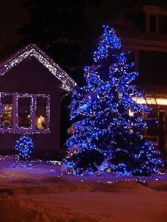 Tree and House with Flashing Outdoor Christmas Lights . Christmas Scenes, Blue Christmas, Outdoor Christmas, Christmas Pictures, Beautiful Christmas, Winter Christmas, Christmas Holidays, Merry Christmas Card Photo, Cottage Christmas